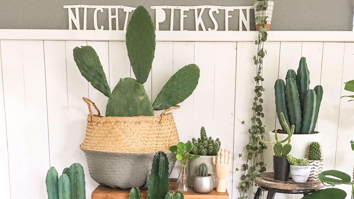 bitte nicht piksen der kaktus als deko liegt voll im. Black Bedroom Furniture Sets. Home Design Ideas